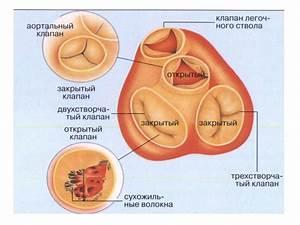 Нелекарственное лечение гипертонии