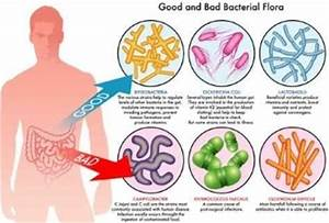 Amazing Facts about your Gut Bacteria | HEAL YOUR GUT AND ...