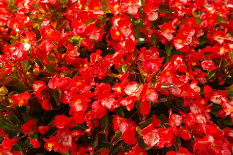 Gardening Terms Every Gardener Should Know » Blooms Today