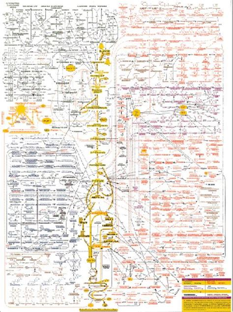metabolism and pathways on pinterest