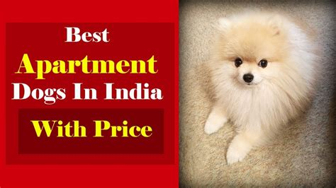 Best Appartment Dogs by Best Apartment Dogs In India With Price List L For