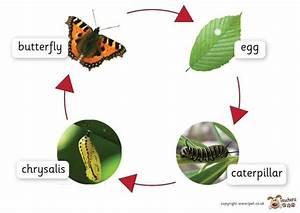 Snails   Fun  U0026 Facts About Terrestrial  U0026 Aquatic Snails