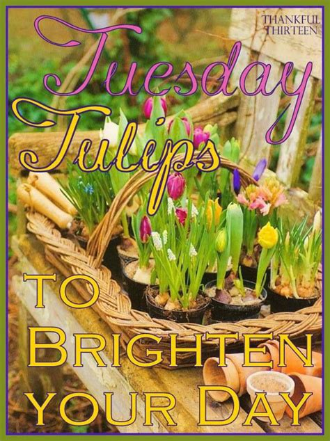 tuesday tulips pictures   images  facebook