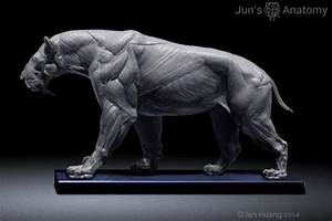 Smilodon Populator Model  1  6th Scale