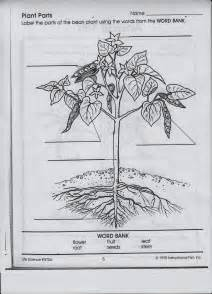 watch more like plant parts worksheet elementary plant cell diagram elementary plant image about wiring diagram