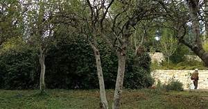 Oskar Schindler's tree, Avenue of the Righteous among the ...