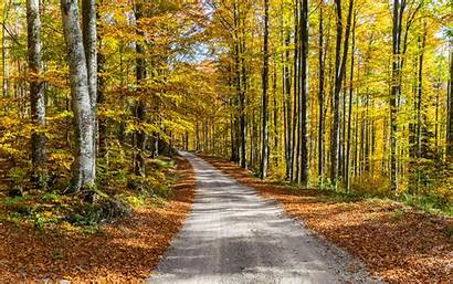 Autumn Trees Road Foliage Widescreen Background Wallpaperscraft