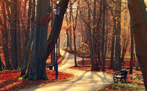 scarica sfondi panchina alberi traccia parco autunno natura lanterna per desktop libero