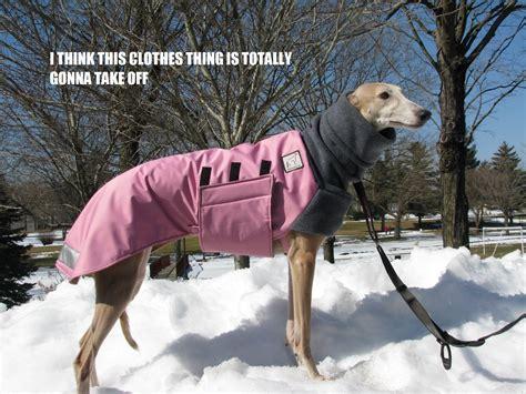 Oz Greyhound Sales Blog