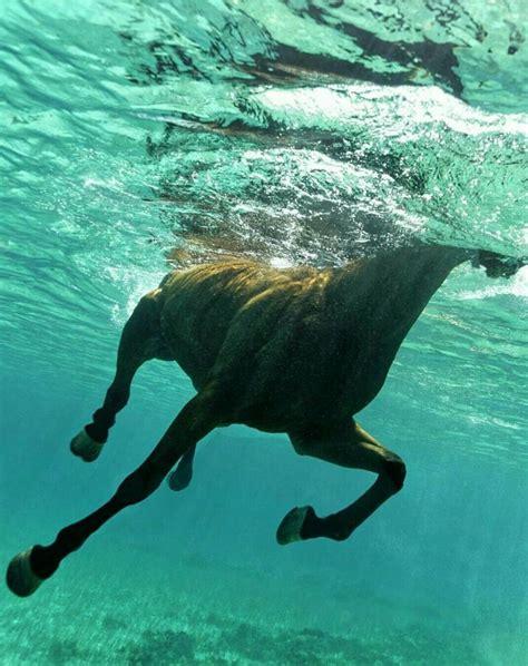 horse underwater swimming horses swim animals riding seahorse caballos bonitos horseback horseman bojack uploaded user arrigo kurt mate descubre sobre