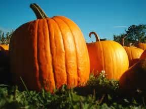 Decorating Pumpkins Fall