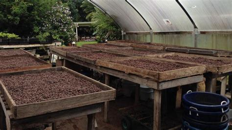 Roast your own coffee at mountain thunder coffee plantation anyone can buy kona coffee in hawaii, but to bring home coffee you roasted yourself, book a small group experience that includes a. Hawaiian Islands Private Hawaii Chocolate And Coffee Plantation Tour — Hilo Hawaii   Shoretrips