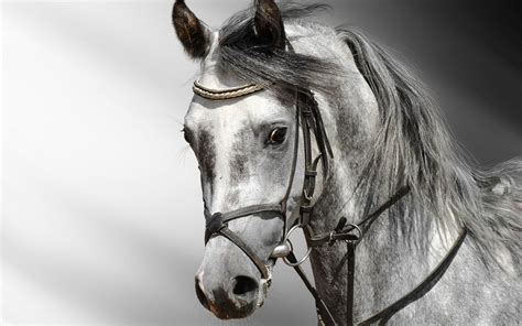3d Black And White Horse Wallpaper
