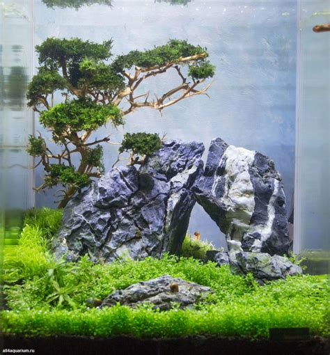 Aquascape Ideas by Stunning Aquascape Design Ideas 50 Meowlogy