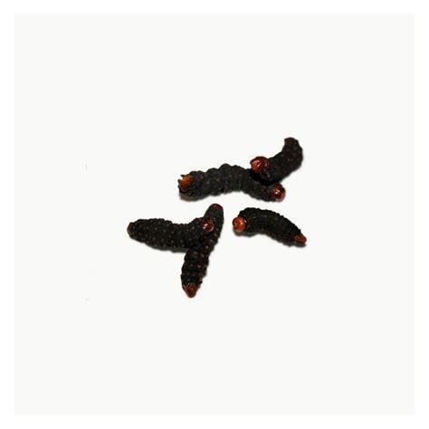 cuisiner les insectes manger des chenilles d 39 afrique insectes comestibles fr