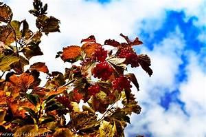 Bilder Herbst Kostenlos : bilder vom herbst sind farbenfroh durch reife fr chte und buntes laub herbstbilder ~ Somuchworld.com Haus und Dekorationen