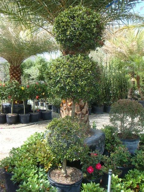 garden center palm garden depot