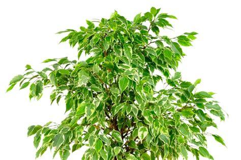 piante da interno con poca luce 6 piante da appartamento crescono bene con poca luce