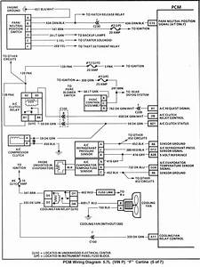 Neutral Safety Wiring Harness Diagram