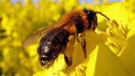 Grebenstein Wegen Dem Milbenproblem Bienen Droht Tod Im