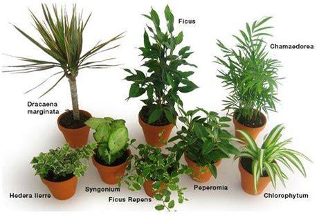 plante dans la chambre liste des plantes dépolluantes qui purifient l 39 air de nos