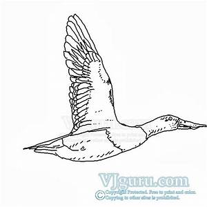 Vjgurucom How To Draw Flying Duck Including High Quality