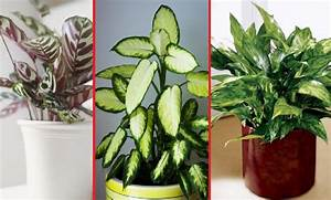 Grande Plante D Intérieur Facile D Entretien : 10 plantes d 39 int rieur faciles entretenir et ~ Premium-room.com Idées de Décoration