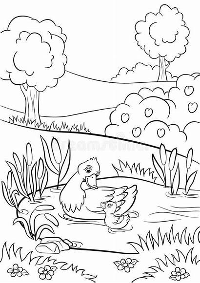 Coloring Pond Duck Flowers Trees Duckling Swim