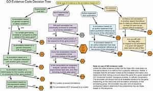 Go Evidence Code Decision Tree Describing The Process Of