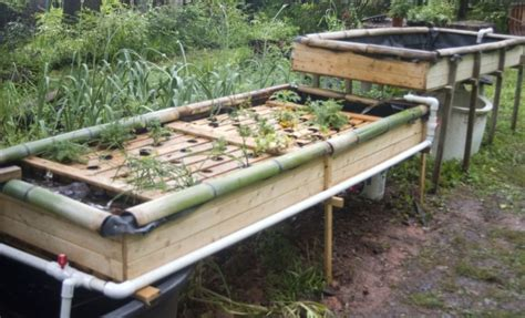 Raise Fish And Grow Your Own Organic