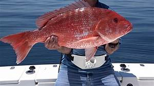 Snap-Zilla - Giant Red Snappers out of Florida - YouTube