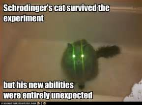 schrodingers cat schrodinger s cat survived the experiment math cats