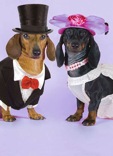 dachshund cards funny cards  postage included