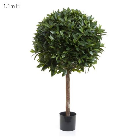 laurel ball tree with 2516 lvs topiary trees trees