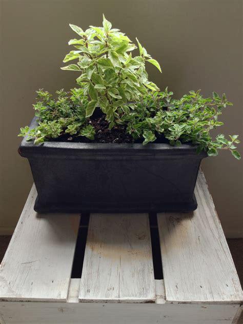 Indoor Windowsill Garden by Secrets To A Thriving Indoor Herb Garden Powhatan Living