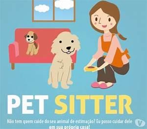 Pet sitter clasf for Babysitter dog sitter