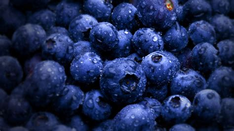 Best Of 16 Berry Wallpapers Free Download