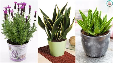 Bedroom Plants For Insomnia by Must These 6 Plants For Your Bedroom Will Cure