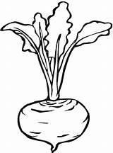 Beet Lettuce Coloring Turnip Drawings Line Printable Beetroot Salad Kid sketch template
