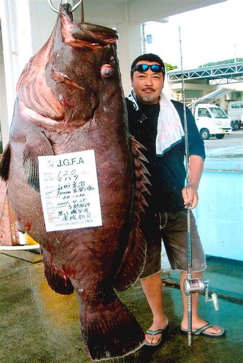 grouper record giant convict biggest fish lb igfa smashes current ikan kerapu terberat dunia fishwithjd todas ver