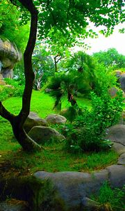 Wallpapers Phone Nature Green - 2020 Android Wallpapers