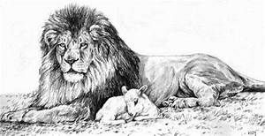 Pencil drawings, Lamb and Lion on Pinterest