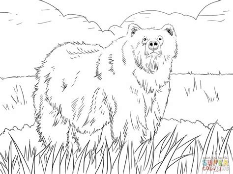 Ox Coloring Page At Getcolorings.com