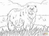 Coloring Ox Pages Malamute Musk Alaskan Printable Objects Clipart Anarchy Getcolorings Getdrawings Print Ant sketch template