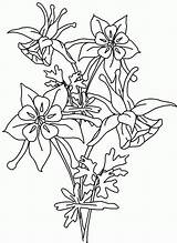 Columbine Coloring Flower Pages Flowers Template Printable Stamp Sketch Rubber Clipart Boys sketch template