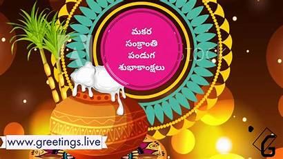 Telugu Sankranti Festival Greetings Animation Makara Sankranthi