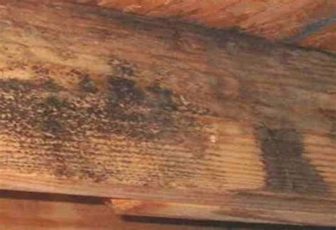 remove black mold  wood removal guide