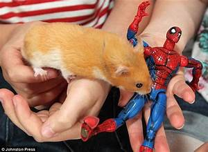 Hamster stuck to cage after swallowing a magnet from ...