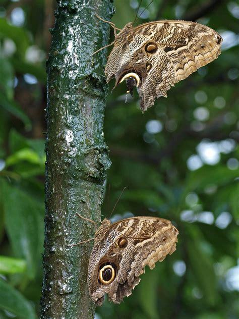 Botanischer Garten Augsburg Schmetterlinge 2017 by Botanischer Garten M 252 Nchen Schmetterlinge 2017 Ideen F 252 R