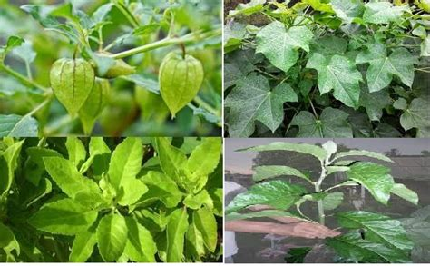 manfaat tanaman obat kesehatan